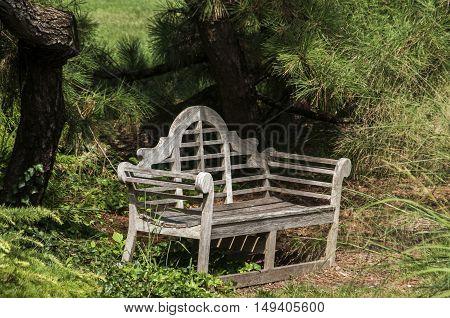 Wooden vintage retro bench in park in summer day
