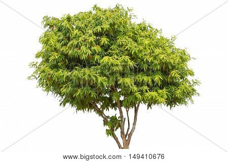 Tree isolated on white background. Tree object for design