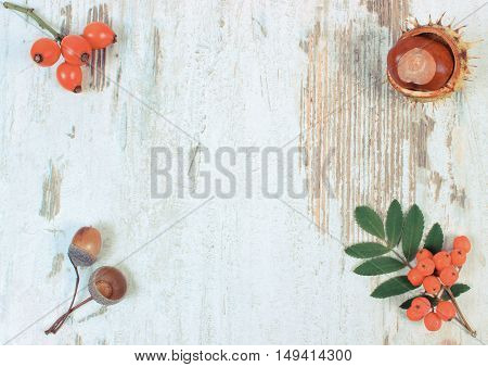 Vintage photo Autumn decoration and copy space for text on old rustic wooden background red rowan wild rose acorn and chestnut