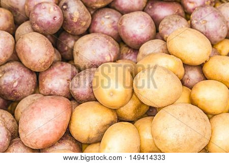The potato harvest.  This photograph was taken at an agricultural exhibition in Kiev.