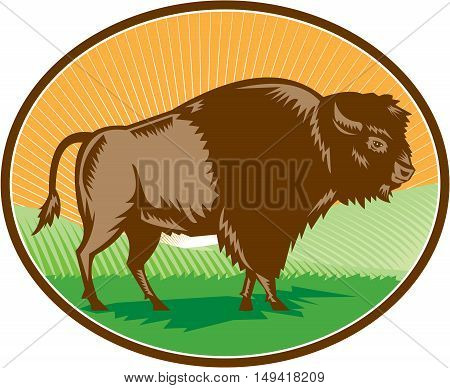 Illustration of an american bison buffalo bull viewed from the side set inside oval shape with sunburst and grass field in the background done in retro woodcut style.
