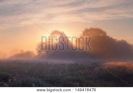 Oak trees on meadow in foggy autumn morning