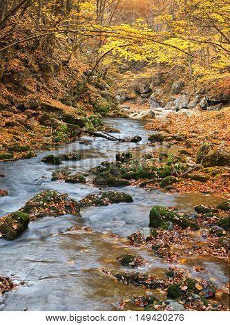 Autumn landscape. Composition of nature. River into canyon.