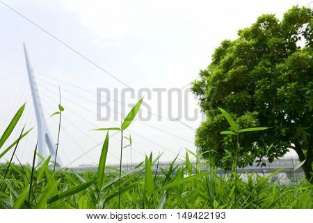 Green Leaves, Trees And Plants Near Bridge