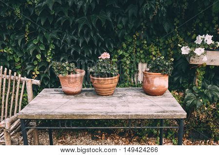 Flower pots with plants on a wooden table in the home garden