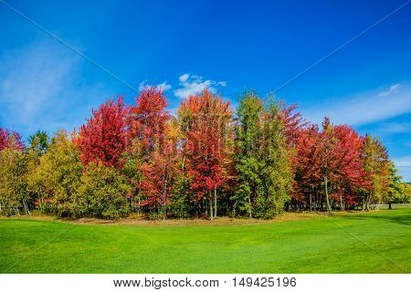 Indian summer in the French Canada. Warm sunny day in suburbs of Montreal. Multi-color trees are beautifully allocated against the background of the blue sky. Concept of eco - tourism