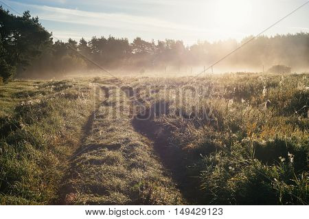 Countryside track leading through meadow with a lot of cobwebs by foggy and sunny morning