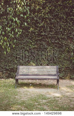 Vintage tone of Garden hedges with a bench