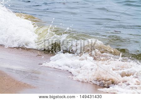 Magnificent Scenery Of Sandy Beach At Motion Of A Gentle Wave.