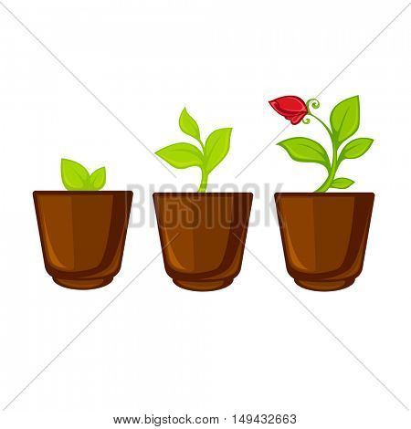 Pots plants with flowers and leaves set. Vector illustration. Isolated on white.