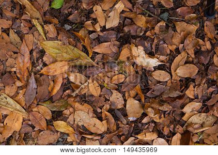 a background of a pile of dry leaves