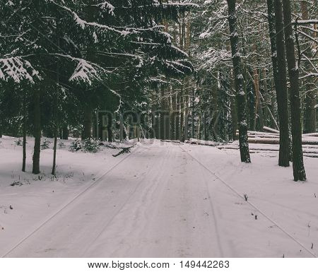 landscape in winter forest near the stock of wood