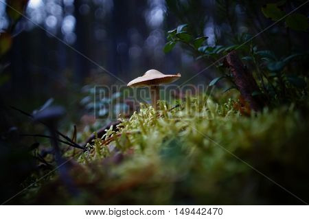 Forest, Fungus,autumn, The Last Of The Mushrooms Are Poisonous