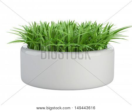 Grass in a white flower pot isolated on a background 3d illustration.