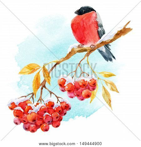 Beautiful image with nice bullfinch on the branch of mountain ash