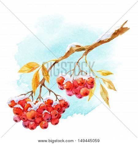 Beautiful image with watercolor hand drawn branch of rowan