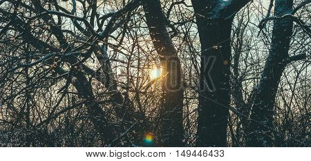 Branches of the tree in winter forest in sunset time