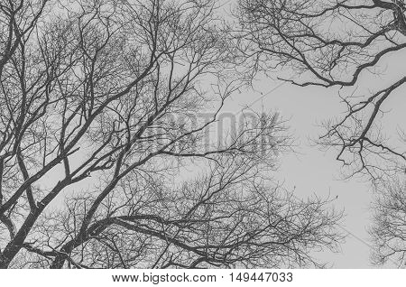 Black and white photo of the branches of tree in winter time