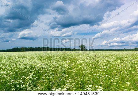 Plain Nature Scenic View