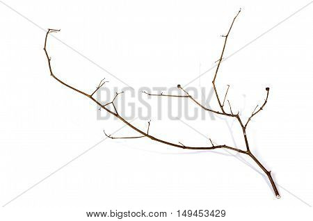 Right Side Shot Of Twig Of Dry Dead Plant
