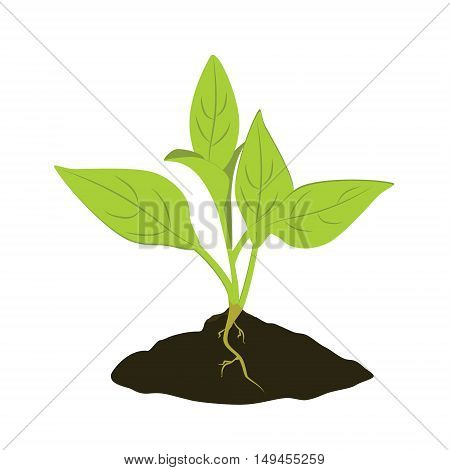 Vector illustration plant growing in the ground. Little plant seedling. Seedling icon