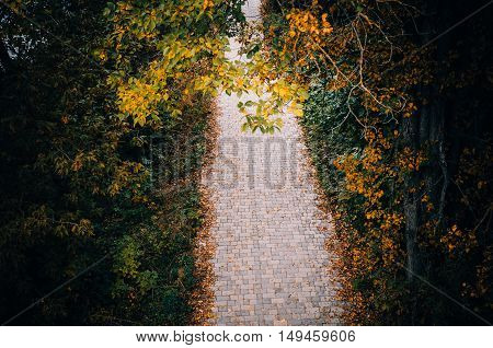 The path of paving stones strewn with yellow leaves