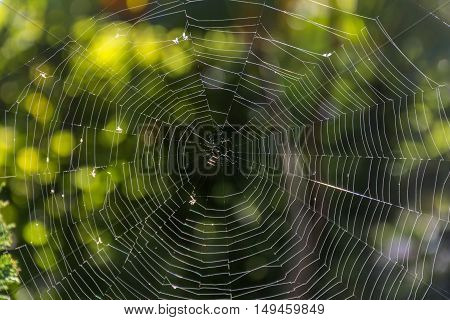 Spider web in the rays of the sun with green natural background.