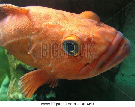 Big Fishy