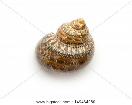 Snail shell isolated on a white background close up