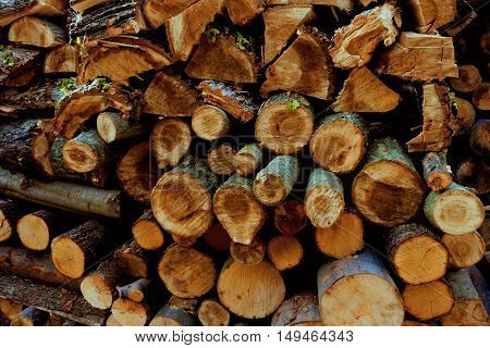 Sawn wood ready for this year winter