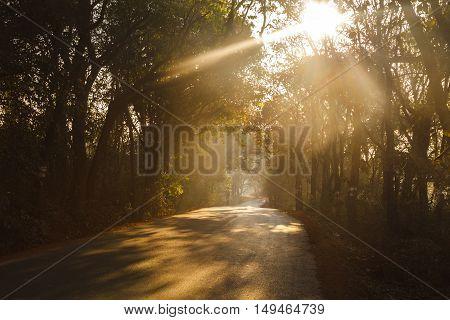 Road through the morning forest, Karnataka, India