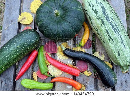 Autumn still-life with ripe vegetables. Hot pepper,  pumpkin, squash, zucchini top view closeup