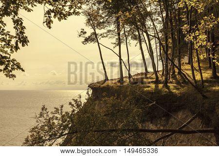 Forest upon the chalk cliffs at Jasmund National park, Ruegen island, Germany