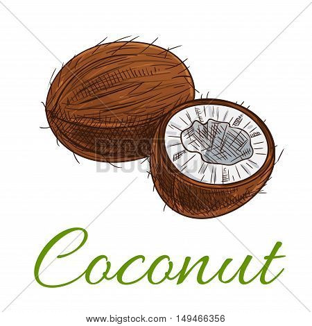 Coconut. Isolated whole and cracked coconuts product emblem for fruit product label, packaging sticker, grocery shop tag, farm store