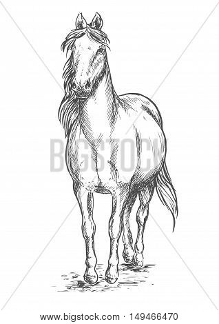 Walking white horse. Stallion standing on hoofs with mane and tail waving in wind. Vector pencil sketch portrait