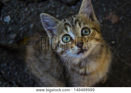 Little Kitten On The Pavement