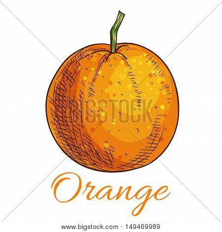 Orange. Isolated citrus fruit product emblem for juice or jam label, packaging sticker, grocery shop tag, farm store