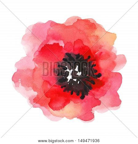 Watercolor illustration of a poppy on a white background. Background for your design and decor.