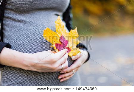 belly of a pregnant woman close-up autumn leaves holding hands