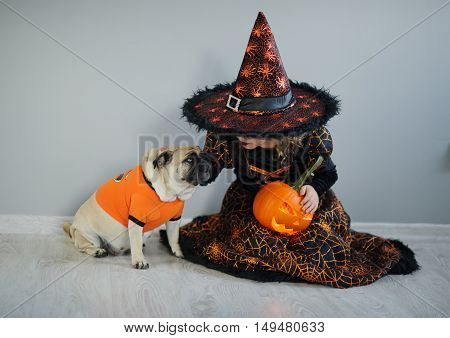All Hallows Eve. Little girl in a suit of the evil sorcerer sits on a floor and irons an amusing pug. On a doggie have put on an orange sweater. The girl holds pumpkin - Halloween symbol.