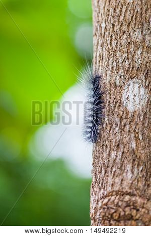 Woolly Bear Caterpillar on the tree with green bokeh