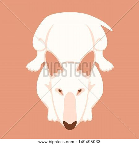 dog bull terrier lying vector illustration style flat