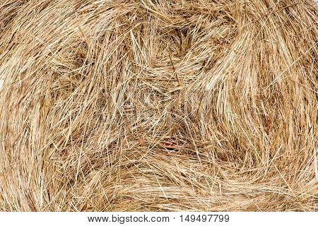 the texture of the haystacks harvested in round bales. the end of the summer dawn