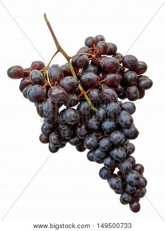 Fresh bunch of grapes isolated on white background. Clipping path included.