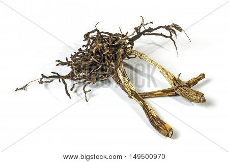 Dead Roots And Dry Pseudobulbs Of Cattleys Orchid
