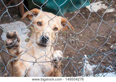 Dog Refuge