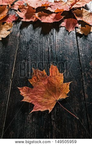 Top vertical recipe frame of fall maple leaves