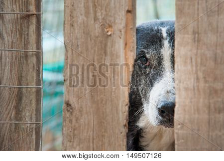 Stray dog behind the corral of a refuge