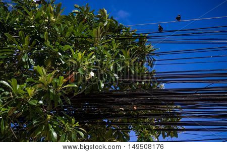 Electrical cables and wires with two sitting birds and green tree leaves over evening sky