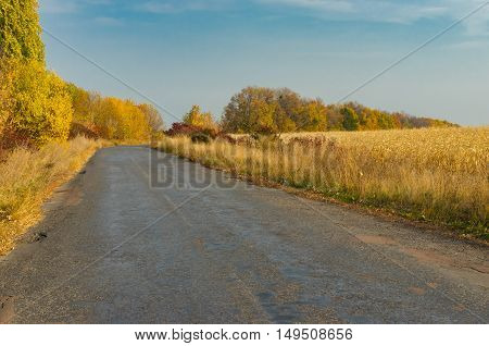 Empty rural road at fall season in Sumskaya oblast Ukraine